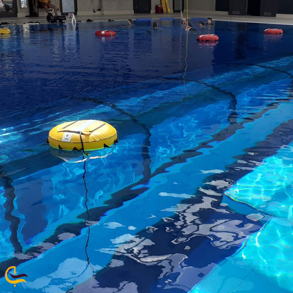 تصویری از شنا و غواصی در استخر دیپ اسپات