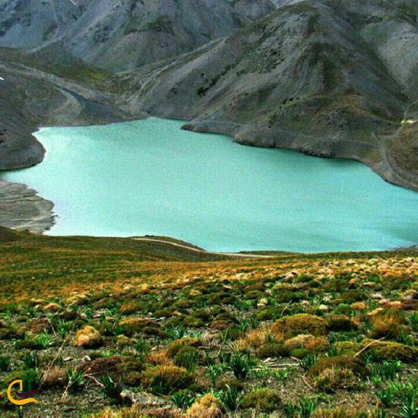 عکس پوشش گیاهی منطقه چشمه سبز گلمکان