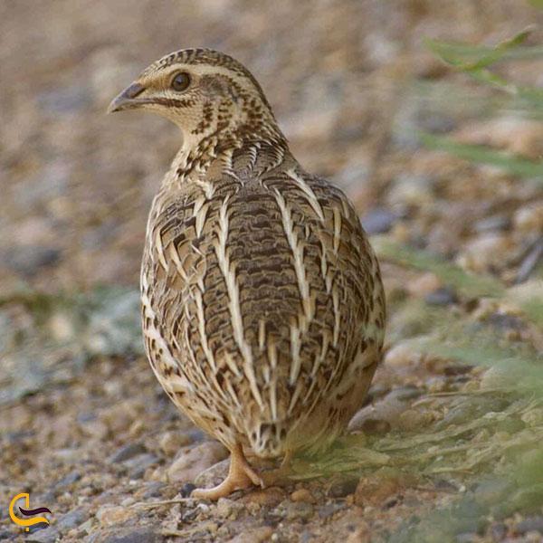 عکس پرندههای وحشی در اطراف ابشار