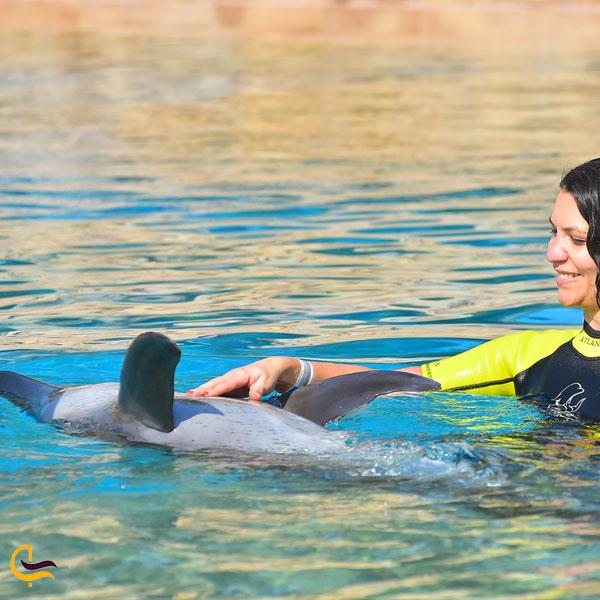 تصویری از پارک دلفین بی دبی