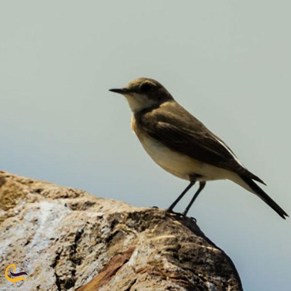 عکس پرندگان منطقه محافظت شده میشو داغ