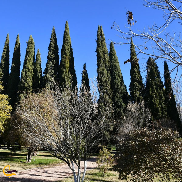 تصویری از باغ ارم شیراز