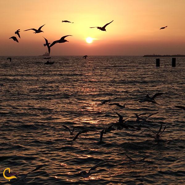 عکس پرندگان دریایی بندر عسلویه