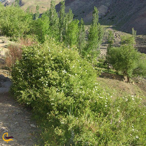 عکس پوشش گیاهی روستای پلکانی توداران