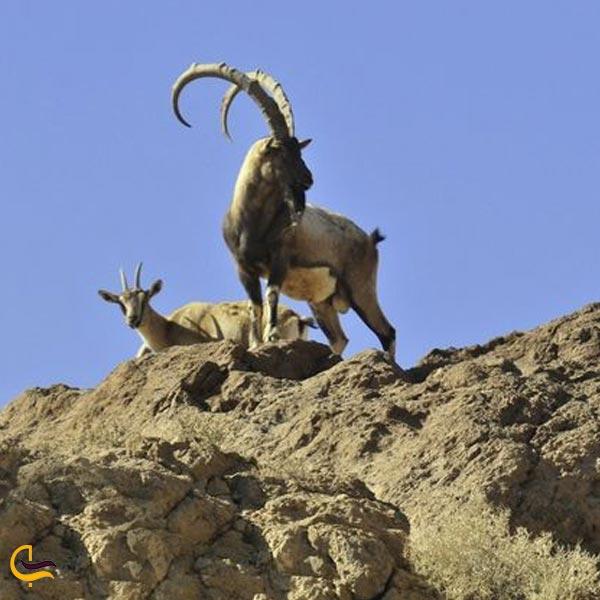 تصویری از پوشش جانوری دره آدرشک مهریز